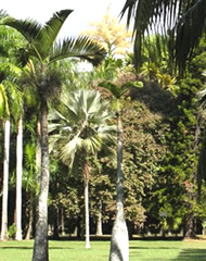 Park à Ile Maurice